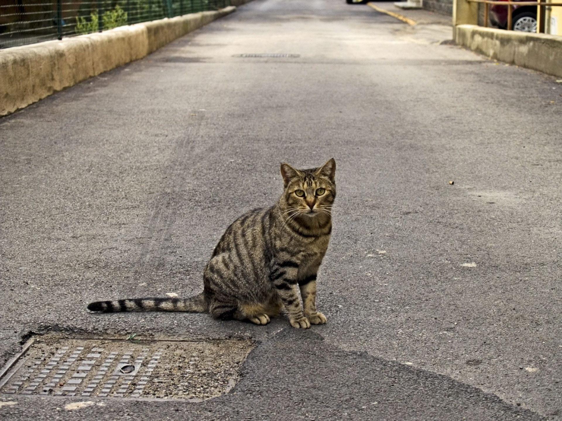 cat_3.jpg