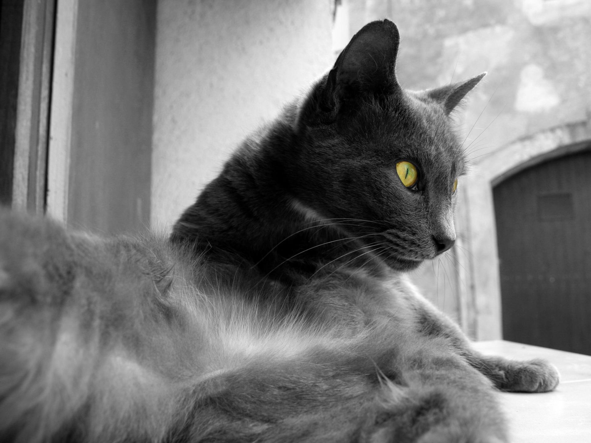 cat_6.jpg