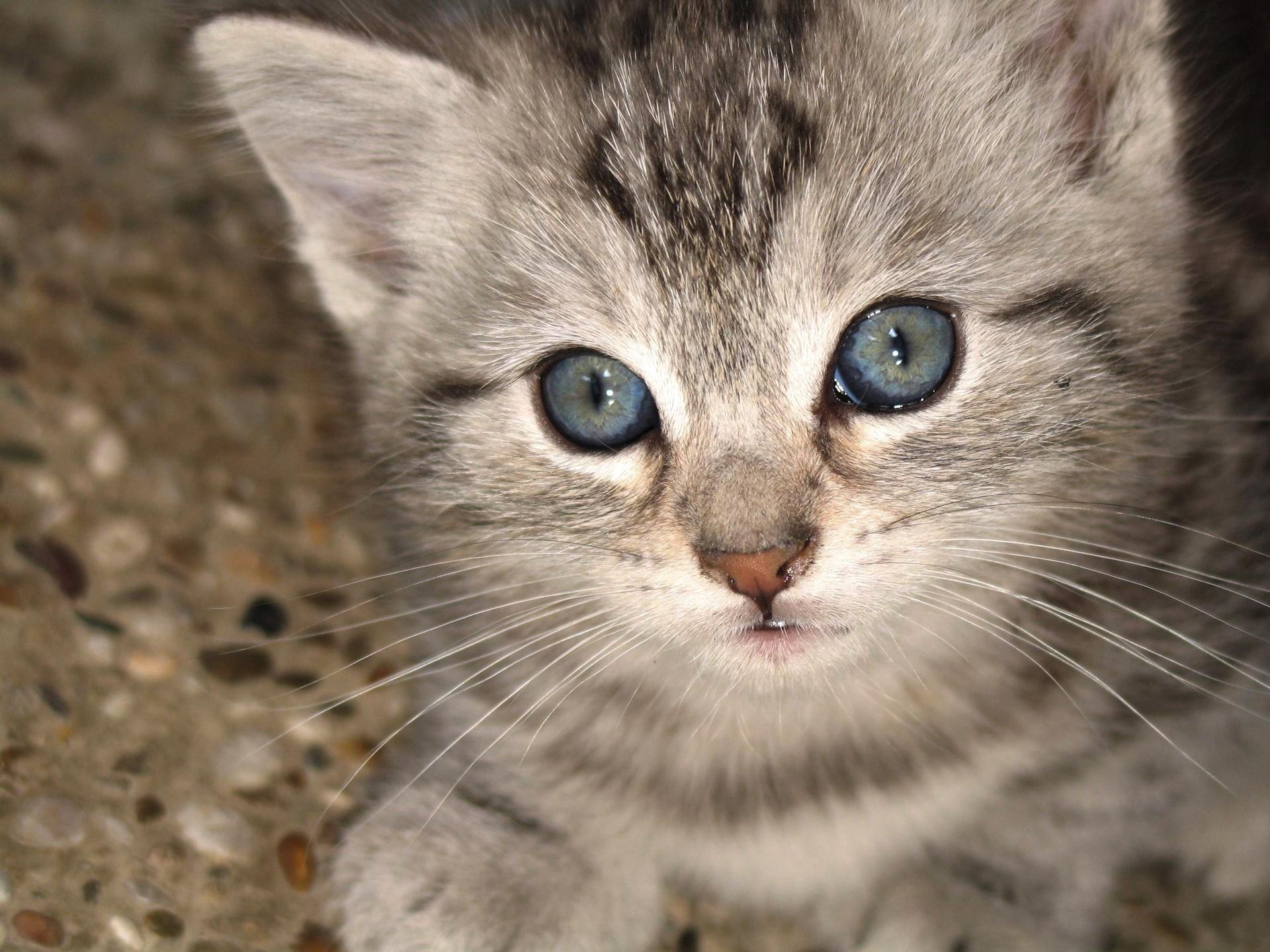 cat_8.jpg