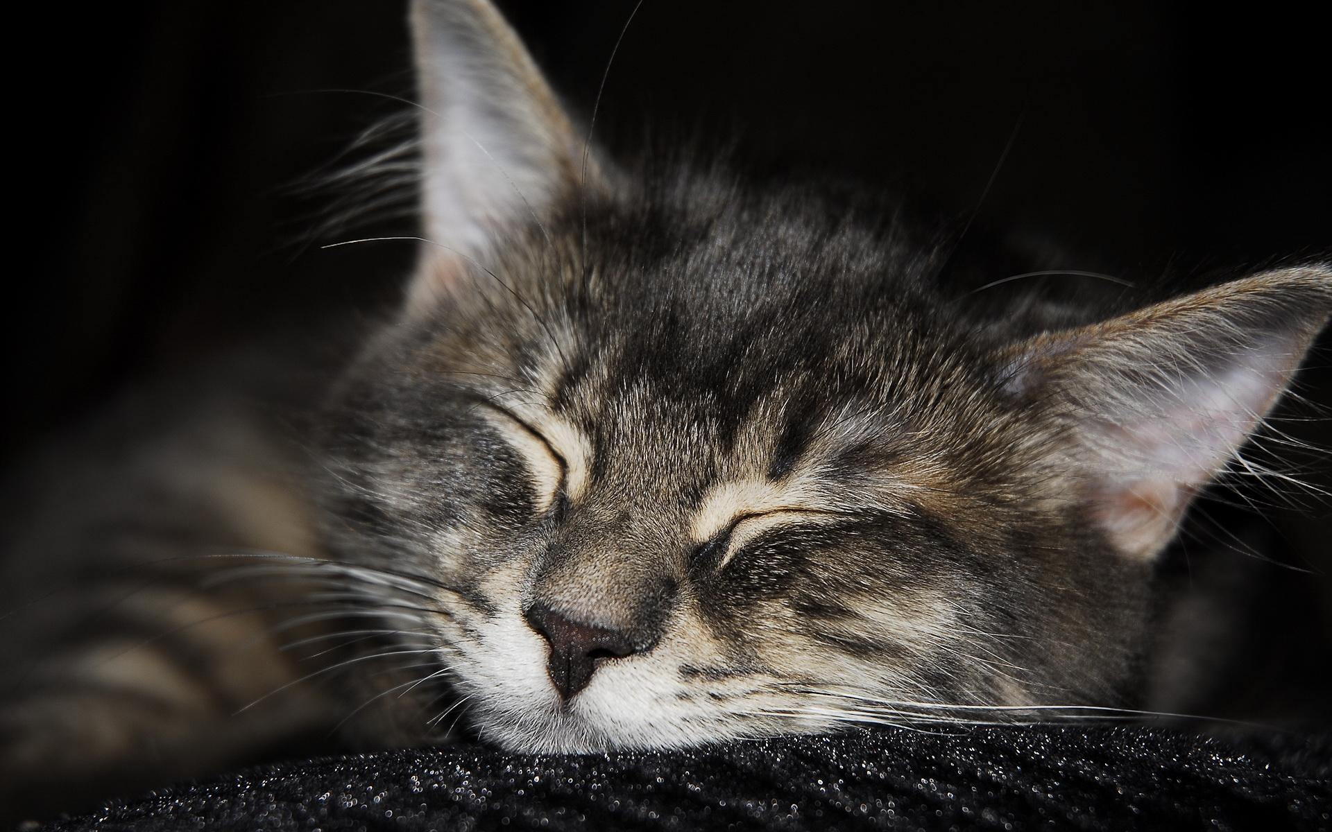 cat_9.jpg